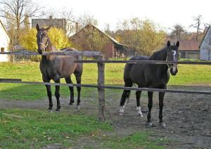 Luk a Borůvka